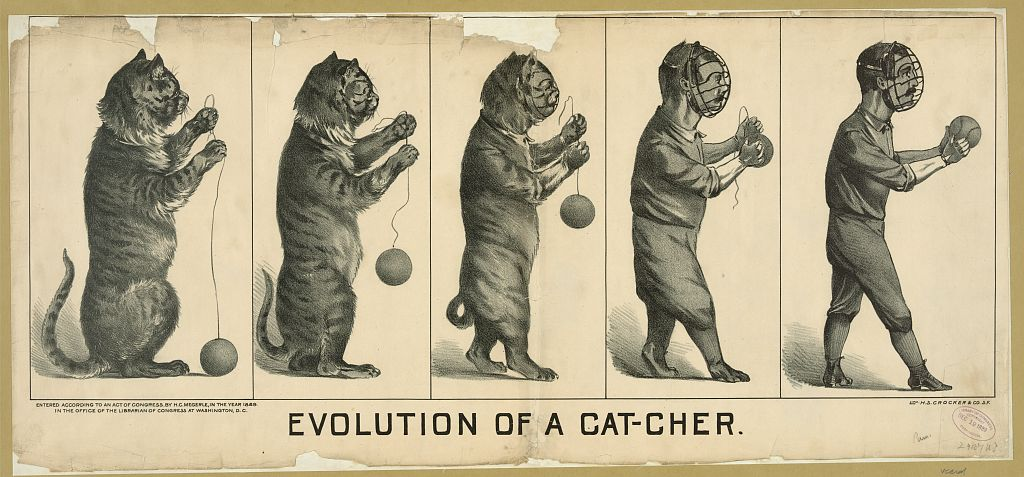 LOC evolution of a cat-cher